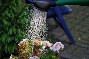 arrosoir pour des plantes