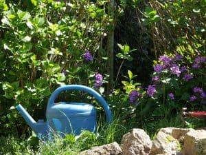 arrosoir dans le jardin