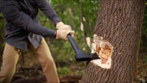 hache pour arbre