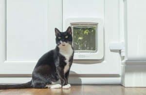 chat à côte d'une chatière électronique