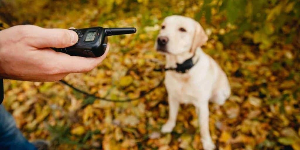 collier anti-fugue pour grand chien et télécommande