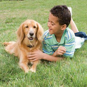 chien avec collier anti-fugue et garçon