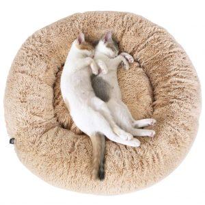 deux chats sur un panier pour chat