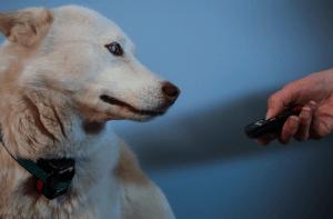 bon collier de dressage pour chien