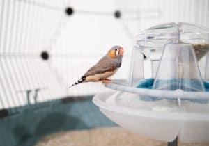 petit oiseau dans une cage pour oiseaux