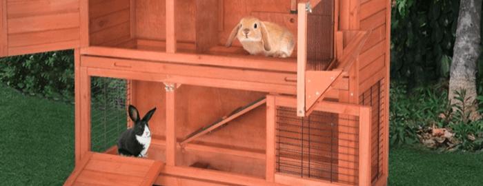 lapins dans une cage de lapin