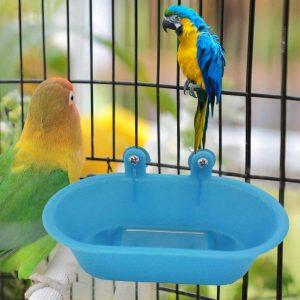 deux oiseaux dans une cage pour oiseaux