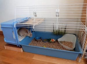 cage de lapin compacte