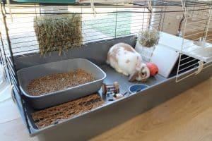 cage de lapin avec lapin