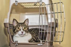chat dans une caisse de transport pour chat