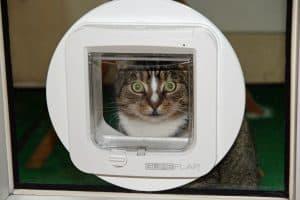 chatière électronique et un chat