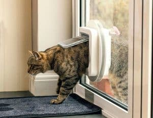 chat en passant une chatière électronique