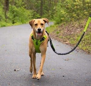 chien avec harnais pour chien pour se promener