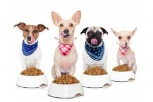 chiens et croquettes pour chien