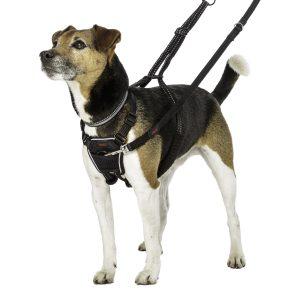 chien petit avec harnais