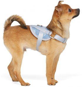 harnais pour chien et chien petit