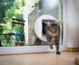chat en utilisant une chatière électronique