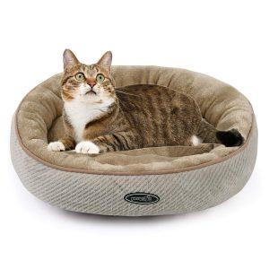 chat adulte sur un panier pour chat