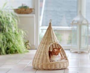 chat dans un panier pour chat