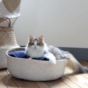 char sur un panier pour chat