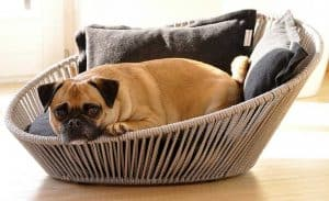 petit chien sur un panier pour chien