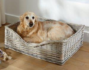 panier pour chien compacte