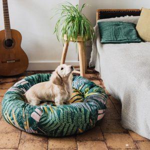 chien petit sur un panier pour chien
