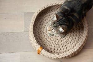 chat et panier pour chat